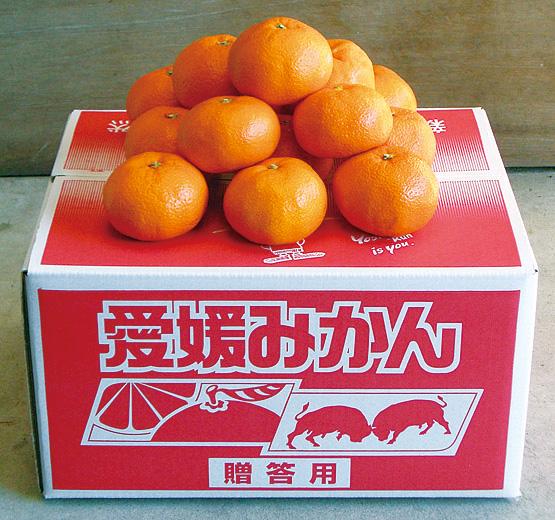 季節の柑橘