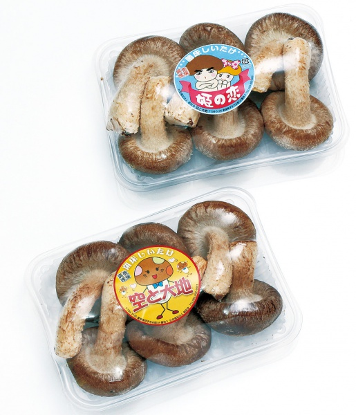 菌床シイタケ(姫の恋、空と大地)